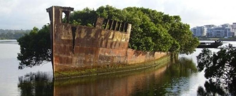 Mangrovníková loď - SS Ayrfield